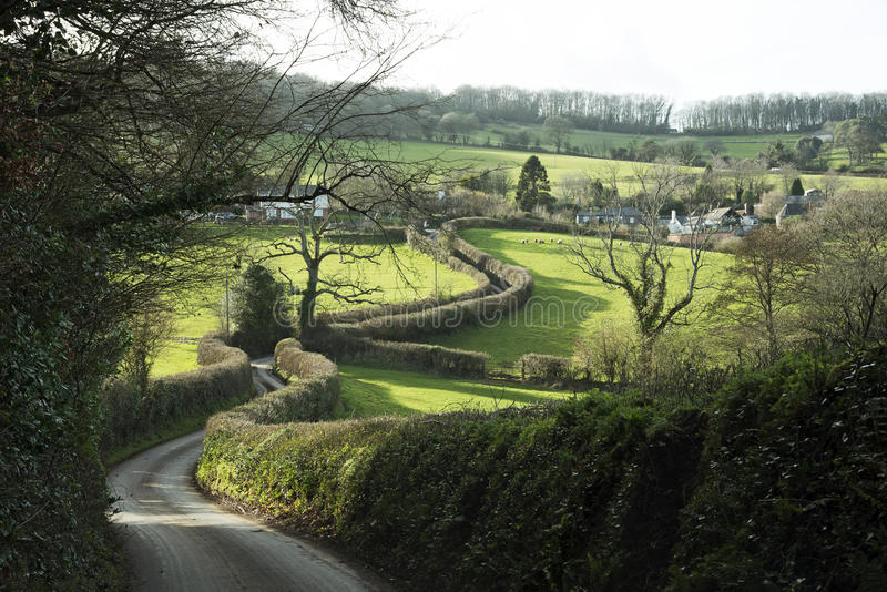 Hedgerow wzdłuż kraju pasa ruchu w Devon Anglia UK obraz stock