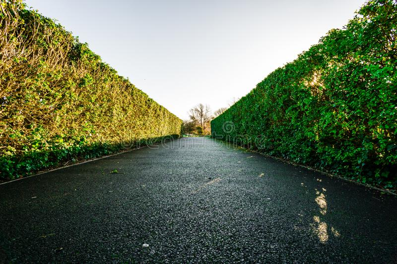 Hedges down a walkway. Path royalty free stock photography