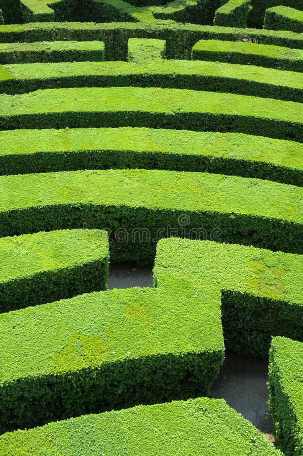 Free Hedges Labyrinth Royalty Free Stock Photo - 9529865