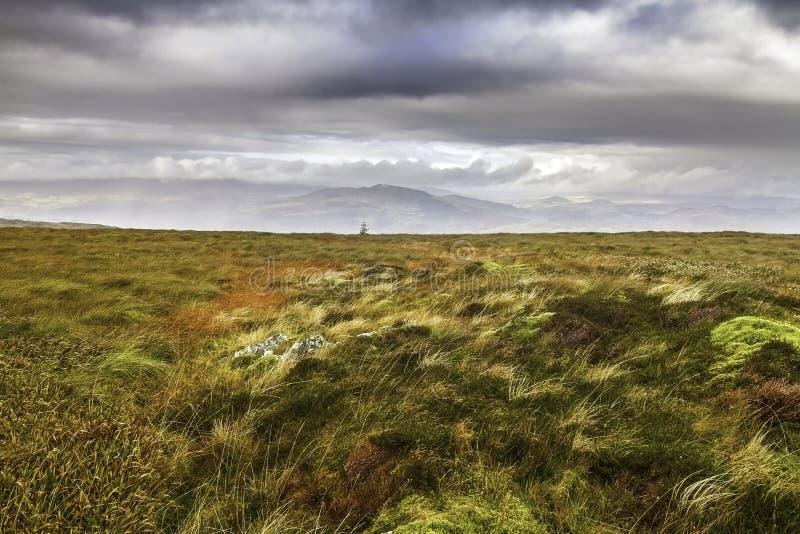 Hedland och myr i den Snowdonia nationalparken i Wales royaltyfri fotografi