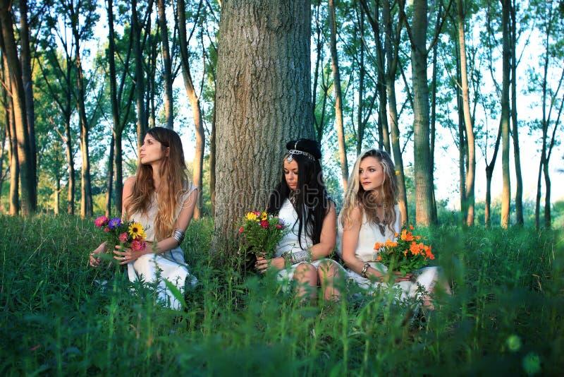 Hedniska flickor i skogen vid trädet royaltyfria bilder