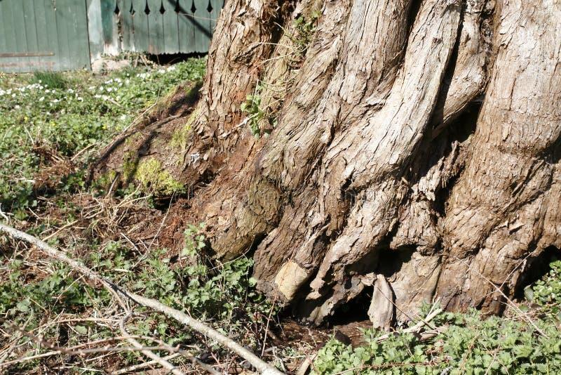 Heeft de leeftijds knoestige boom door een kleine beekmanier ontruimd royalty-vrije stock fotografie