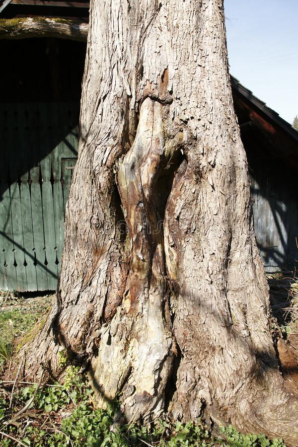 Heeft de leeftijds knoestige boom door een kleine beekmanier ontruimd stock foto's