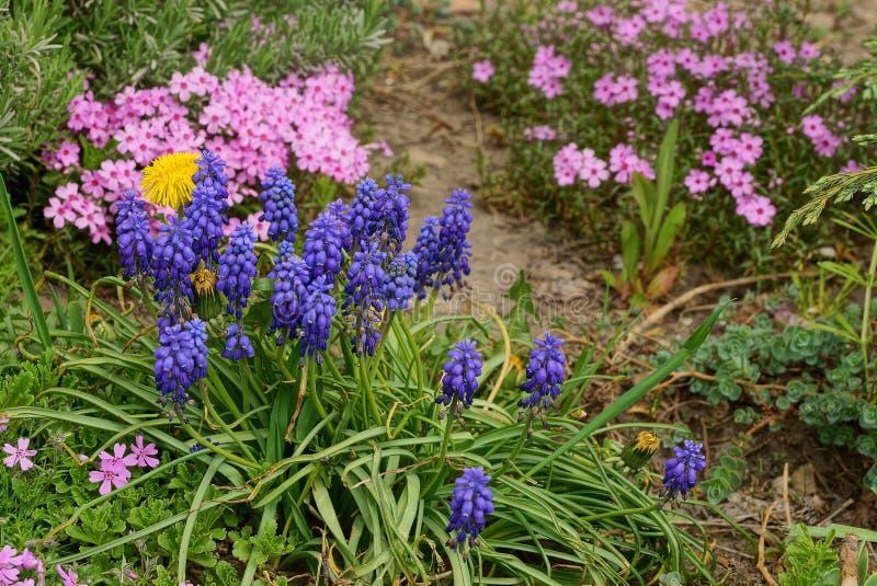 Heel wat blauw in rode bloemen onder groen gras ter plaatse in de tuin royalty-vrije stock afbeelding