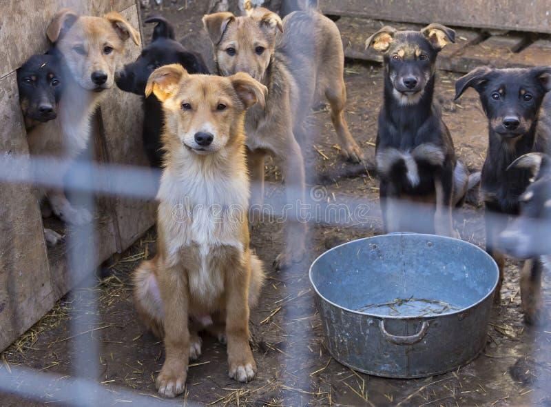 Heel wat droevige puppy achter de tralies bij de schuilplaats stock foto's
