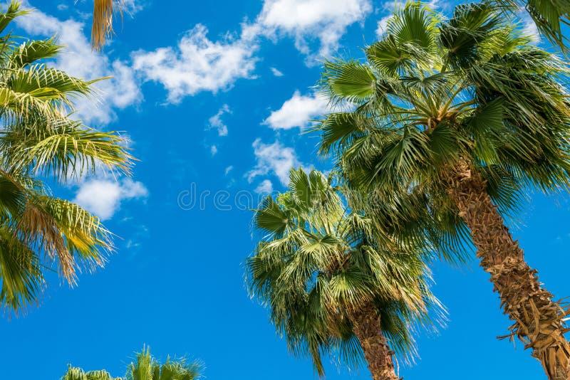 Heel wat grote groene Afrikaanse palm tegen de blauwe hemel royalty-vrije stock foto