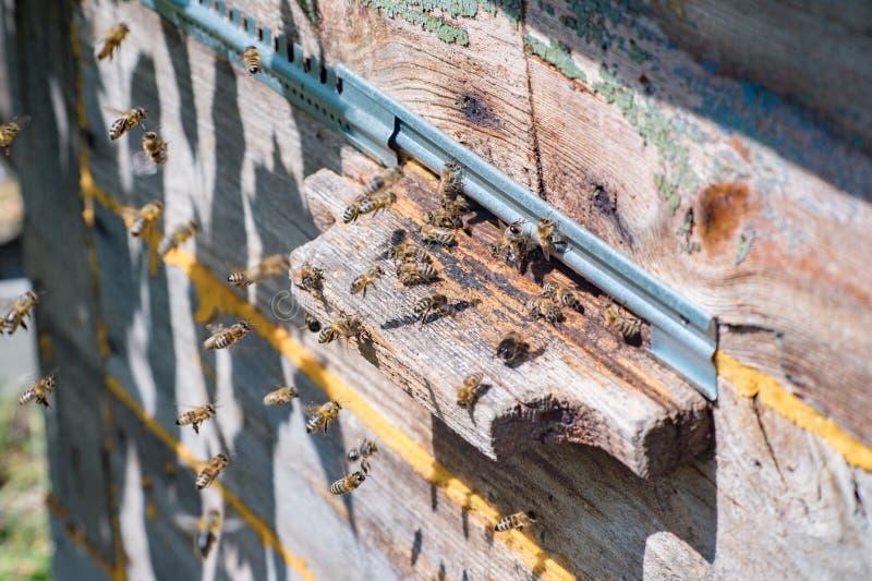 Heel wat honingbijen dichtbij de ingang van de uitstekende bijenkorf stock fotografie