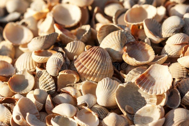 Heel wat kleine shells in één plaats stock afbeeldingen
