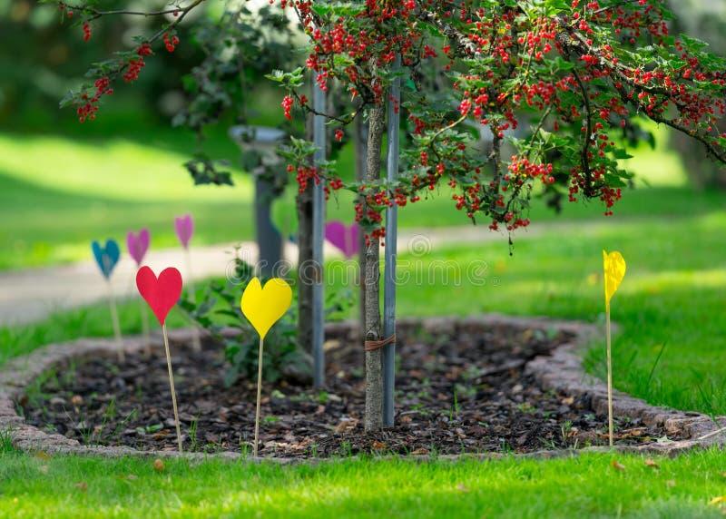 Heel wat kleurrijke document harten op houten stokken in de tuin royalty-vrije stock foto