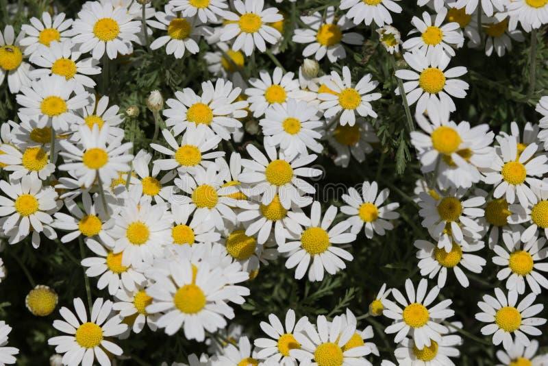 Heel wat mooie witte bloemen stock foto's