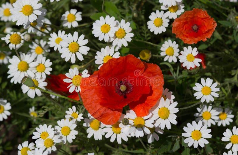 Heel wat mooie witte bloemen royalty-vrije stock foto