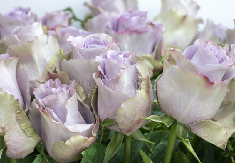 Heel wat roze bloemen verzachten lilac kleurenclose-up royalty-vrije stock fotografie