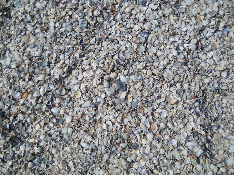Heel wat shells royalty-vrije stock afbeelding