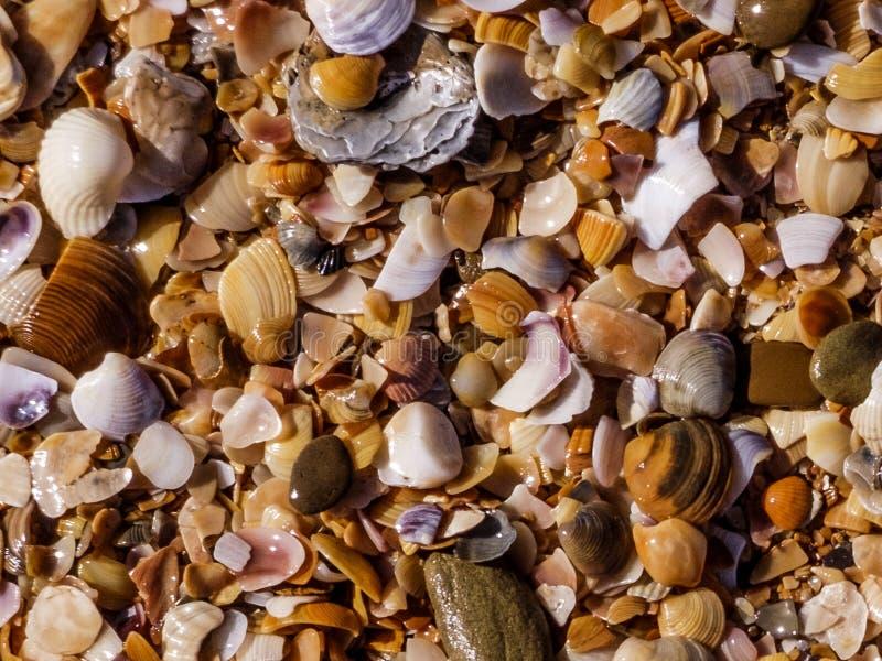 Heel wat shells op de kusttextuur royalty-vrije stock foto