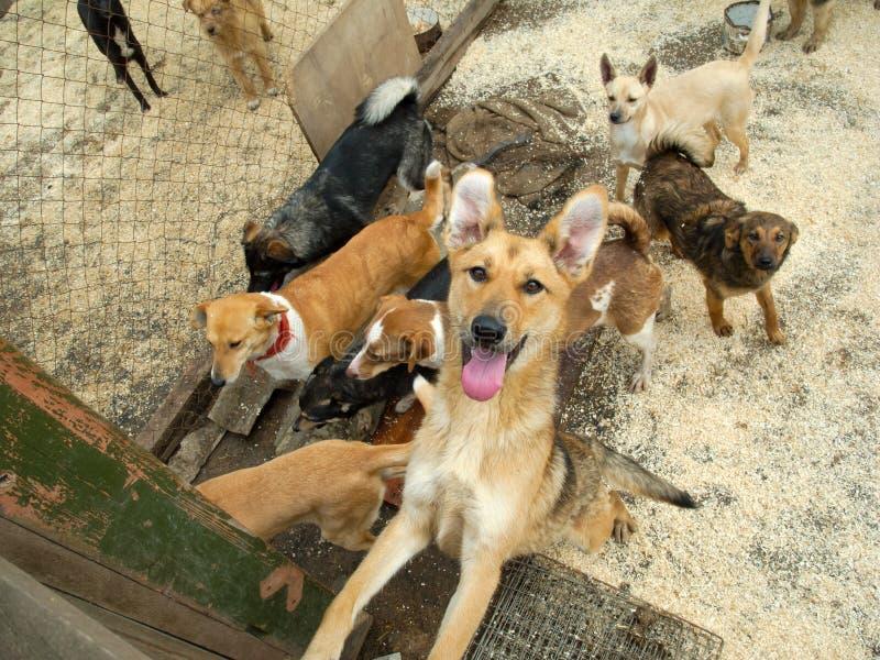 Heel wat verdwaalde honden stock afbeeldingen
