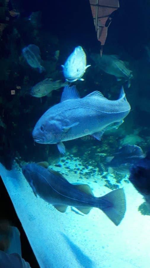 Heel wat vissen stock afbeelding