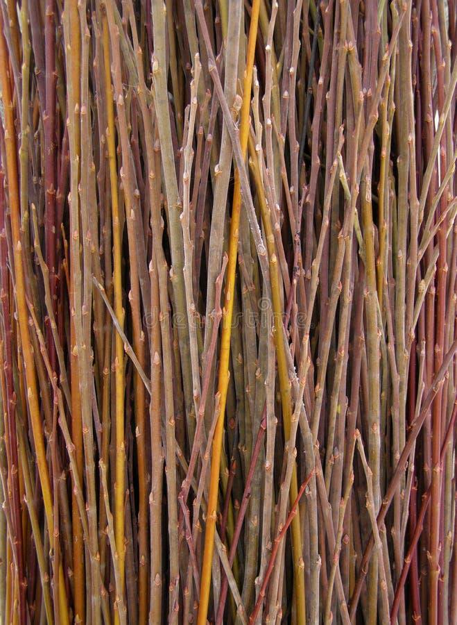 Heel wat wilgentakjes - grondstof voor mandewerk stock fotografie