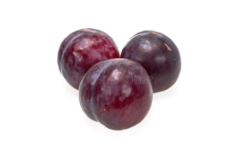 Heerlijke rijpe pruim, een sappig fruit met één enkel hard zaad royalty-vrije stock afbeeldingen