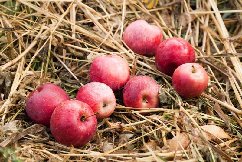 Heerlijke rode de appeldaling van de de herfstlandbouw, vers fruitvoedsel, oogst royalty-vrije stock foto