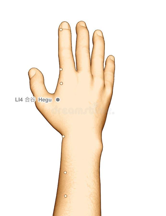Hegu del punto LI4 di agopuntura del disegno, illustrazione 3D fotografie stock