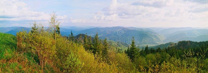 Heiße Farben des Waldes in den Bergen stockfotos