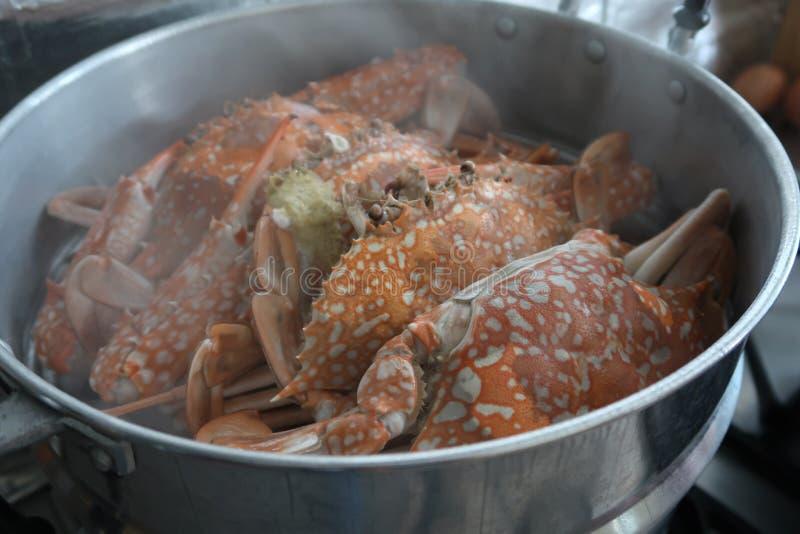 Heiße gedämpfte blaue Krabben in einem Topf lizenzfreie stockfotografie