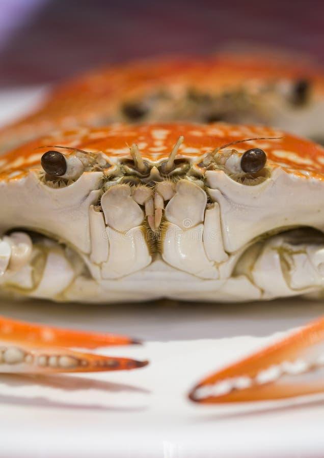 Heiße gedämpfte Krabben lizenzfreie stockfotos