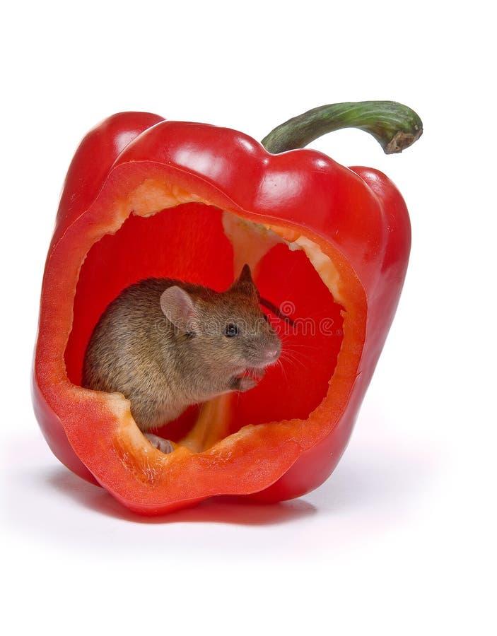 Heiße Maus stockbilder