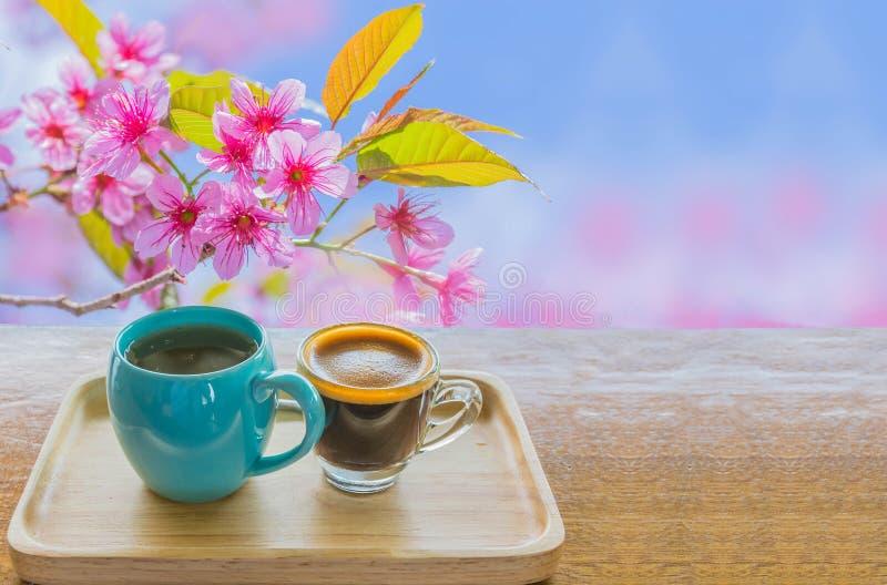 Heißer Kaffee und Tee mit Weiche unscharfer wilder Himalajakirsche, Kirschblume, Kirschblüte-fower von Thailand-Hintergrund lizenzfreie stockfotografie