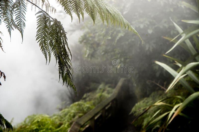 Heißer Strom Waikite und Terrassen, vulkanisches Tal stockfoto