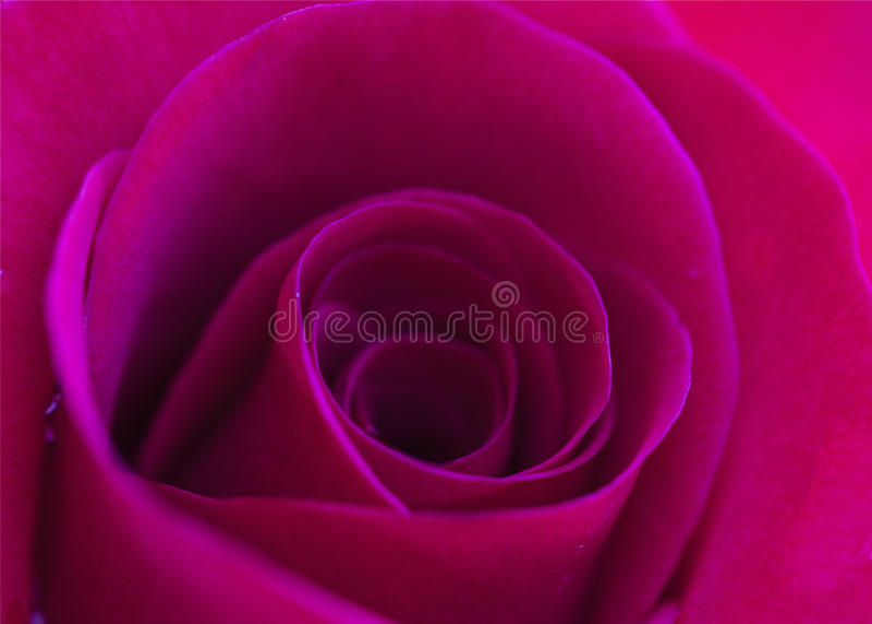 Heißes Rosa lizenzfreie stockfotos