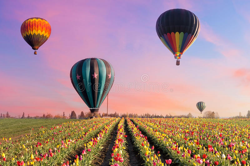 Heißluft-Ballone bei Tulip Fields lizenzfreie stockfotografie