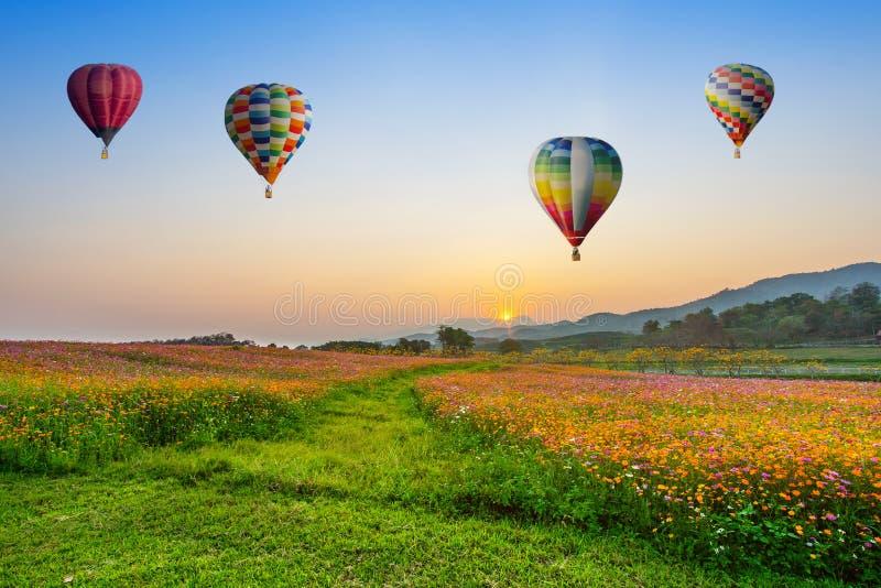 Heißluftballonfliegen über Kosmosblumenfeldern auf Sonnenuntergang stockfotografie