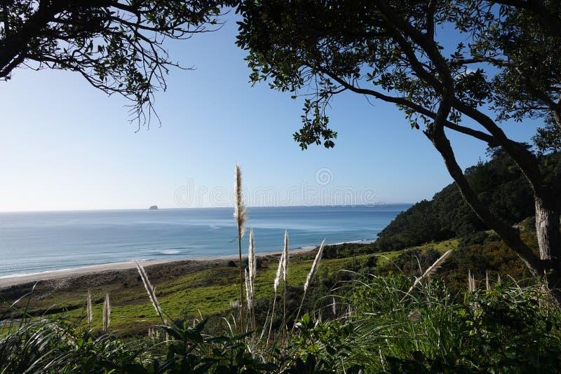 Heißwasserstrand auf Coromandel-Halbinsel in Neuseeland lizenzfreie stockfotos