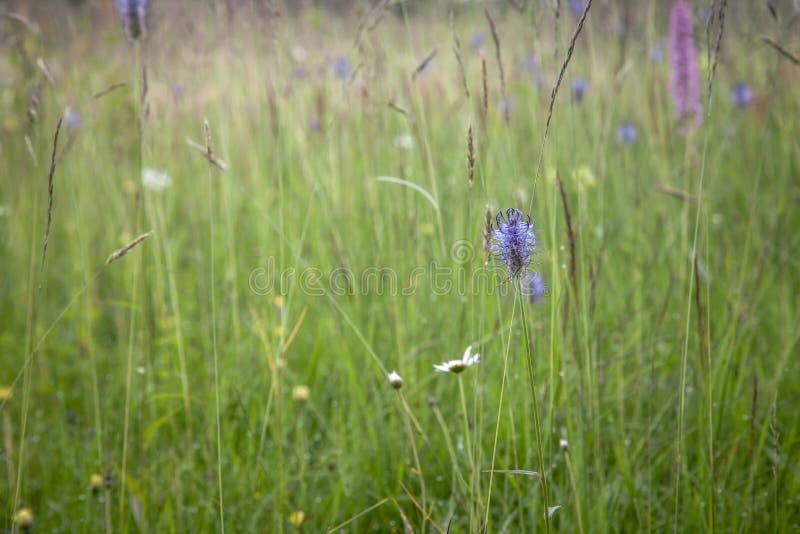 Heide blüht Hintergrund lizenzfreie stockfotografie