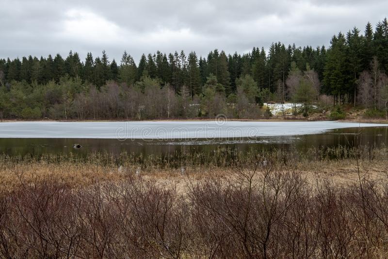 Heide, die in den Sumpfgebieten in Norwegen w?chst lizenzfreie stockfotografie