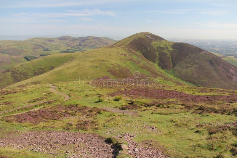 Heide in Pentland-Heuvels dichtbij Edinburgh, Schotland stock afbeeldingen