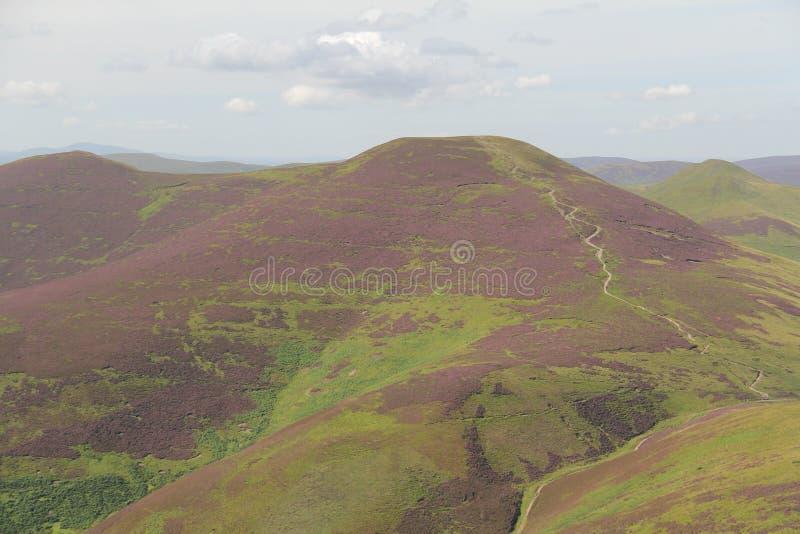 Heide in Pentland-Heuvels dichtbij Edinburgh, Schotland stock foto's