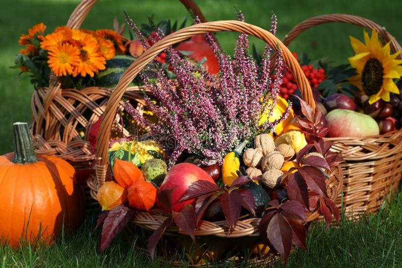 Heidekraut in den Herbstflechtweiden stockfoto