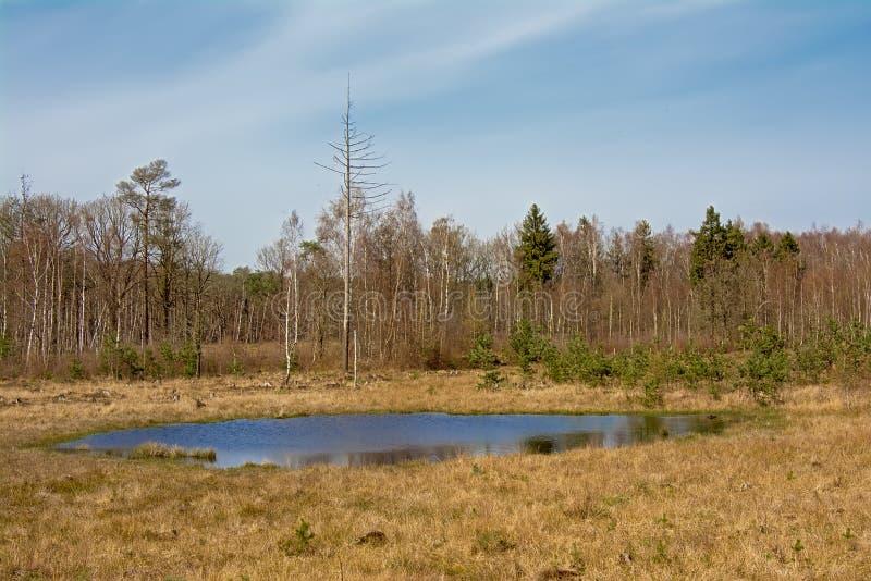 Heidelandschaft mit Fenn und Wald im Hintergrund lizenzfreie stockfotos