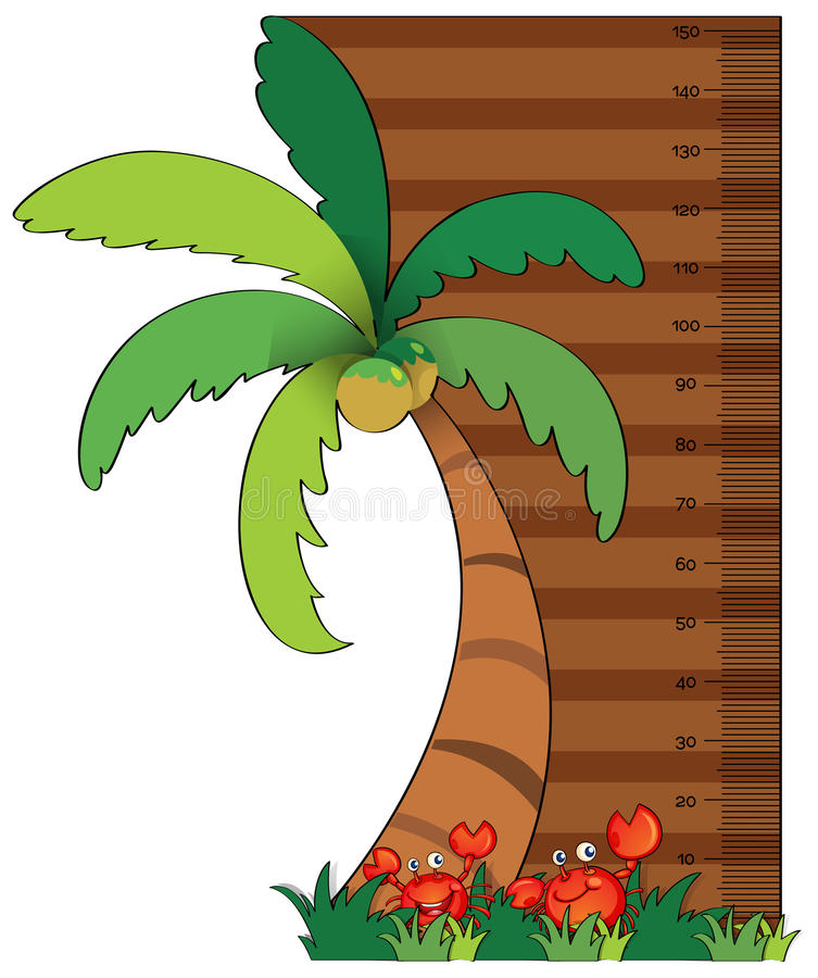 Height measurement chart with coconut tree royalty free illustration