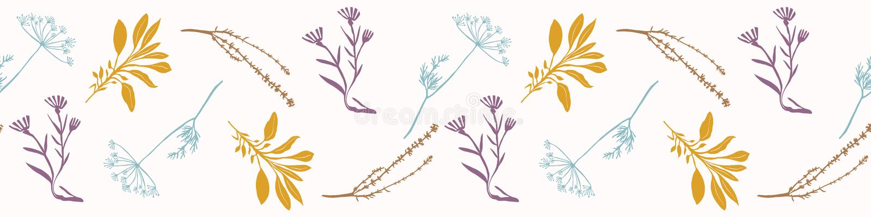 Heilig Droog Herb Bunches Seamless Vector Border Esoterische Kruidengeneeskundesalie stock illustratie
