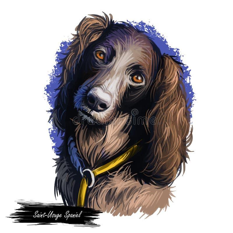 Heilig--Usugespaniel-Hundeporträt lokalisiert auf Weiß Digital-Kunstillustration des Handgezogenen Hundes für Netz, T-Shirt Druck lizenzfreie abbildung