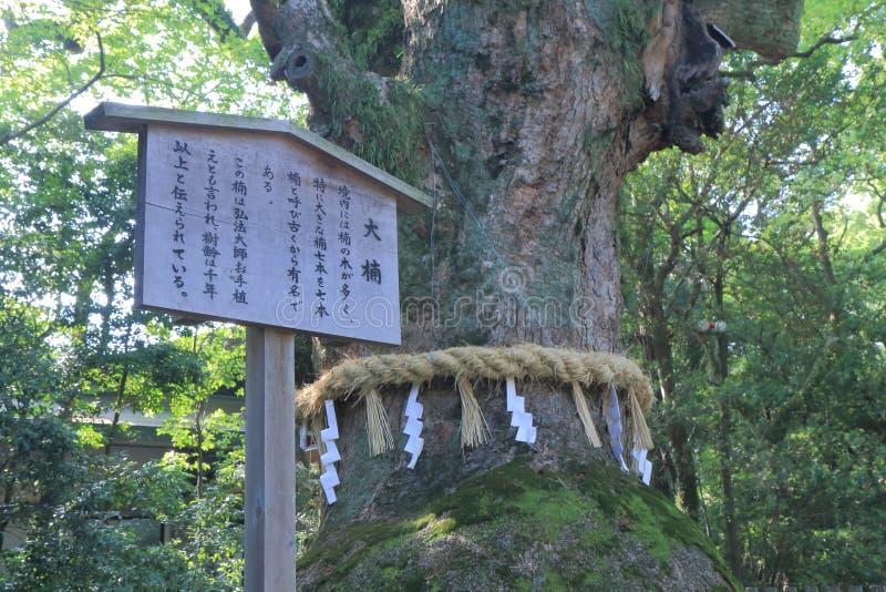 Heilige boom in Atsuta-Heiligdom Nagoya Japan stock fotografie