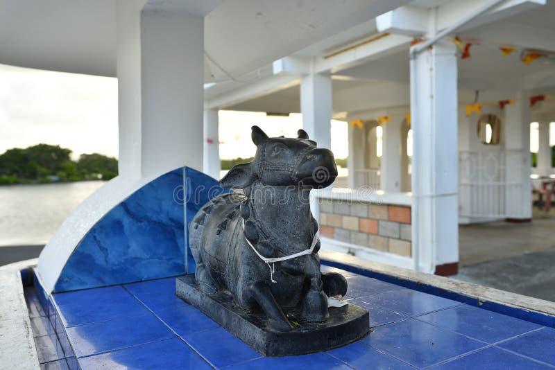 Heilige koe Postde Flacq, Mauritius stock afbeeldingen