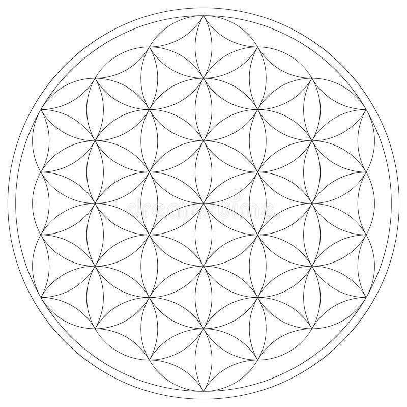 Heilige Meetkundebloem van het Levens vectorillustratie stock illustratie