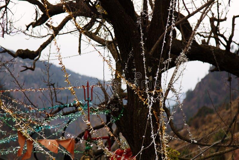heiliger Baum mit roten Taschentüchern lizenzfreie stockfotos