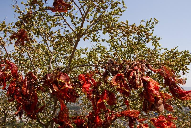 heiliger Baum mit roten Taschentüchern stockfoto