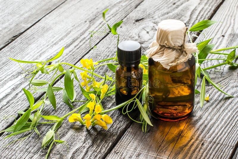 Heilpflanze Lathyrus pratensis und pharmazeutische Flaschen lizenzfreie stockfotos