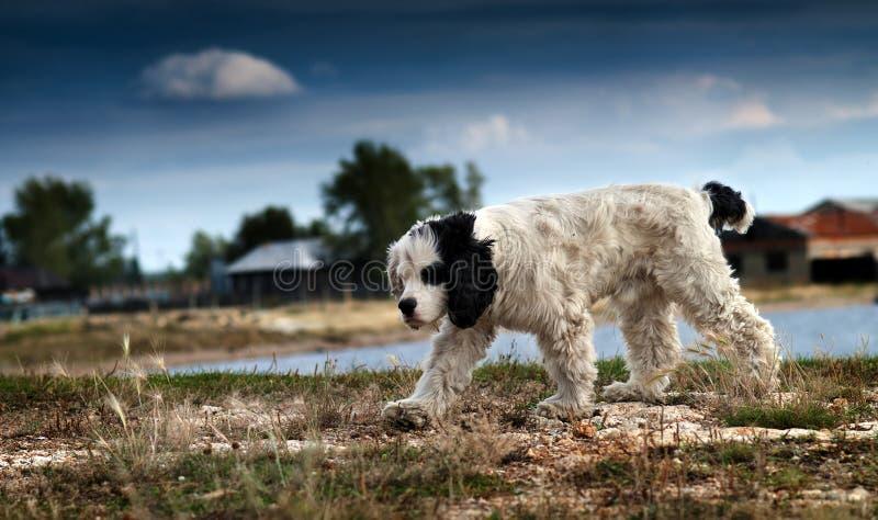 Heimatloser Hund stockfoto